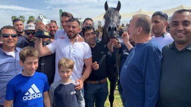 مهرجان الربيع للخيول العربية